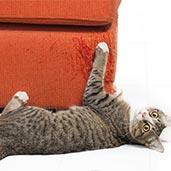 貓抓壞沙發